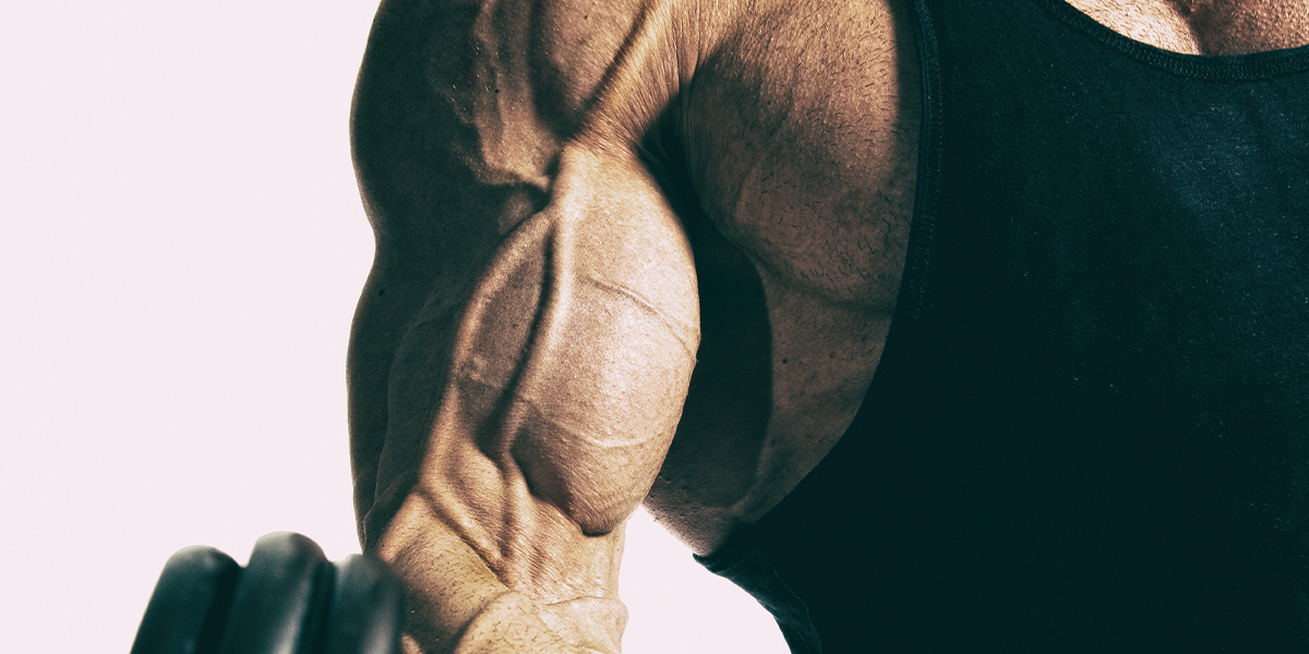 DDPY Dynamic Resistance Cables and Curls
